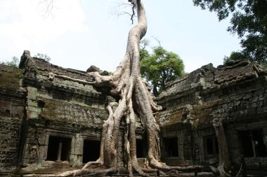 CAMBODGE Temple Angkor Ta Prohm 2009
