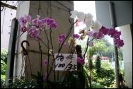 HONGKONG Marche aux fleurs septembre 2007